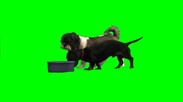 Perros comiendo fuera del tazón de fuente — Vídeo de stock
