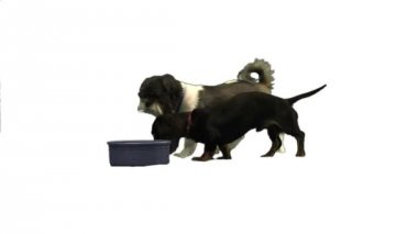 Dogs eating out of bowl — Stock Video
