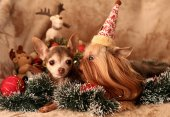 Holiday with dogs — Stock Photo
