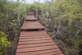 Wooden path Galapagos — Stock Photo