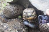 галапагосская черепаха — Стоковое фото