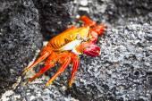 Zayapas crabs — Stock Photo