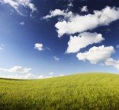 Campos verdes — Foto de Stock