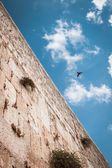 50 50 composition, to show half heaven half earth. Wailing wall with blue sky on the background, and bird in the sky. Jerusalem, Israel — Stock Photo
