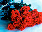 Bouquet of red roses on blue background — Stock Photo