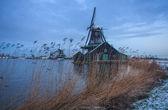 Rural dutch scenery — Stock Photo