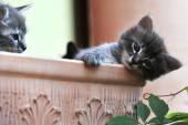 Cute kitten — Stock Photo