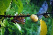 медоносных пчел — Стоковое фото