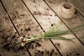 Chives tied with a rope to the ground — Stock Photo
