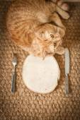 Red cat near the wooden plate with knife and fork — Stockfoto