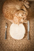 Red cat near the wooden plate with knife and fork — Стоковое фото