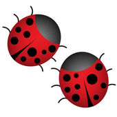 Pair of ladybugs on white — Stock Vector