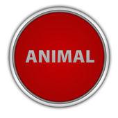 Icona animale circolare su priorità bassa bianca — Foto Stock