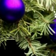 Coniferous Tree with Colorful Balls — Stock Video #64606043