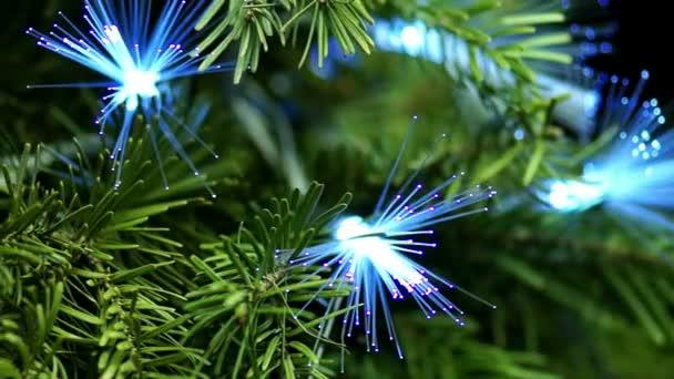 Árbol conífero con fibra azul — Vídeo de stock
