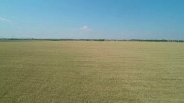 Flight over the Wheat Field. — Stock Video