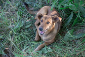 Mutt Dog — Stock Photo
