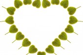 Heart-shaped tree on white background — Stock Photo