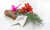 Rowan tree bunch and Christmas tree branch — Stock Photo