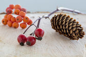 Rural wild fruits — Stock Photo