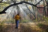 Morning walk in autumnal forest — Stok fotoğraf