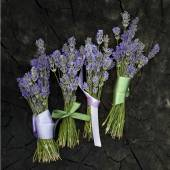 Lavender bunches — Stock Photo