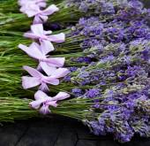 Rural harvest of lavender flowers — Stock Photo