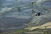 Flooded rice fields in South China — Stock Photo