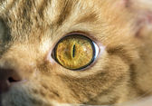 Close-up beeld van cat's eye — Stockfoto