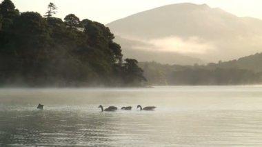Derwent lake in the mist — Stock Video