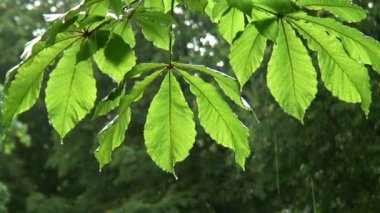 Rain Leaves in the sun — Stock Video
