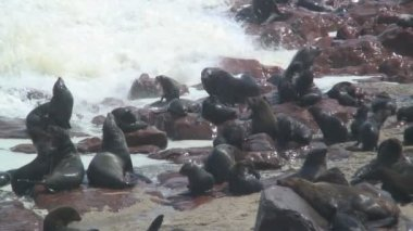 Seal colony on the shore — Vídeo de stock