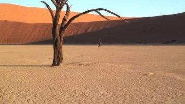 Deadvlei Namib Desert — Stock Video