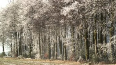 Trees in snow — Stock Video