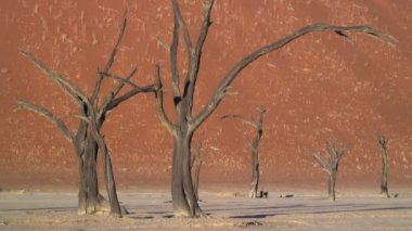 Tourist in Deadvlei Namib Desert — Stock Video