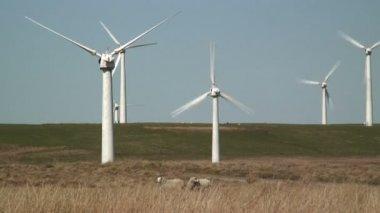 Wind Farm , Newtown — Stock Video