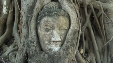 Ayutthaya's Famous Tree Carved Buddha — Stock Video