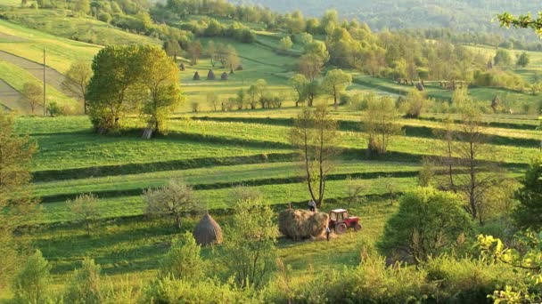 People in the field in Romania — Vidéo