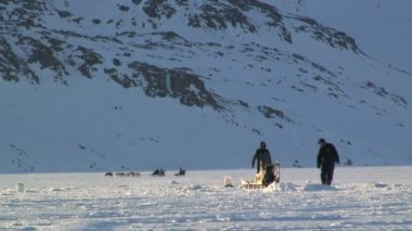 Males with two dog sledges — Vídeo de stock