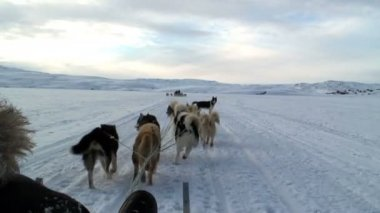 POV dog sledding — Wideo stockowe