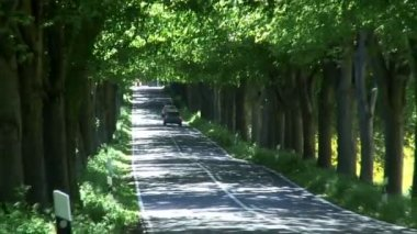 Tree Lined road — Stock Video