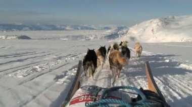 POV dog sledding near the village — Wideo stockowe