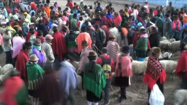 Large Group of people at a Sheep Market — Stock Video