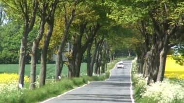Tree lined road with vehicles — Stockvideo