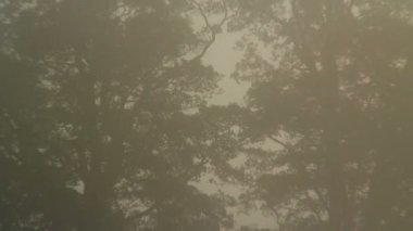 Sunlight and morning mist — Stock Video