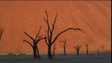 Dead Vlei Namib Desert — Stock Video