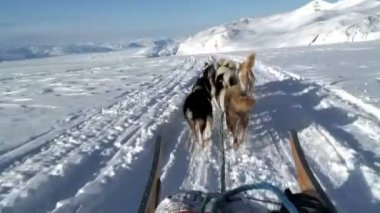 POV dog sledding near the village — Stockvideo
