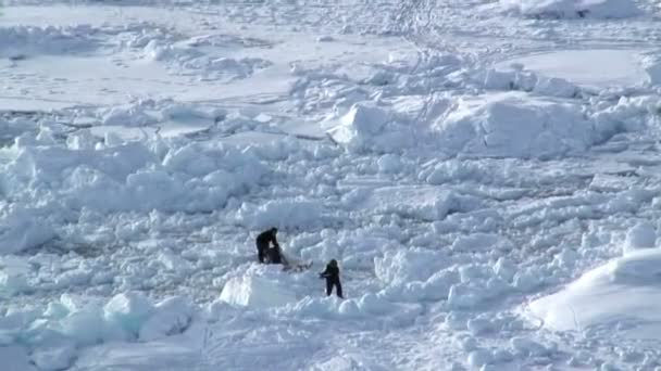 Males with sledge going Ice fishing — Vidéo
