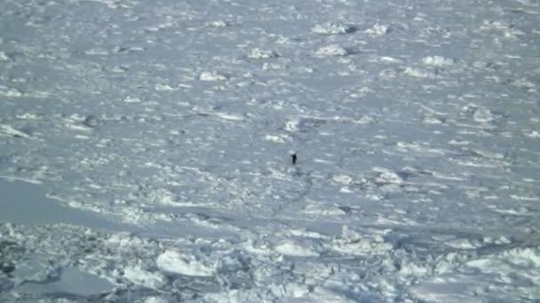 Solitario hombre de pesca en el hielo — Vídeo de stock