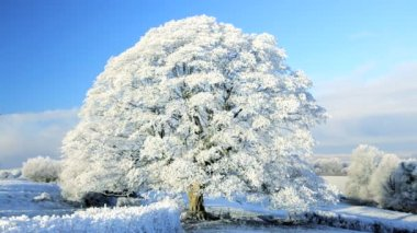 Ice covered tree — Stock Video